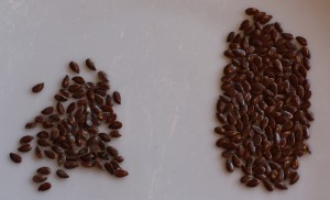 New flax seed