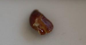 New flax seed, bruised